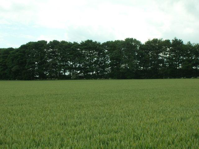 Farmland, Birdsall Wold