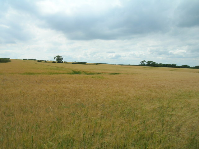 Farmland, East Wold
