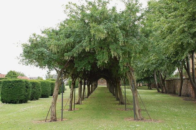 Laburnum walk, Preston Tower gardens