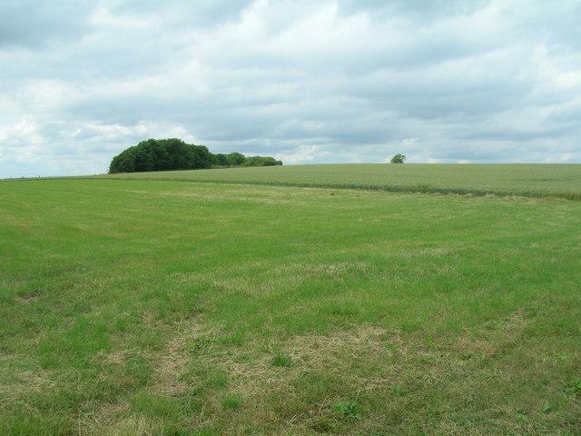 Farmland,  Wharram Grange