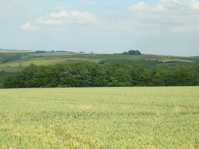 Farmland looking towards Lund Wood