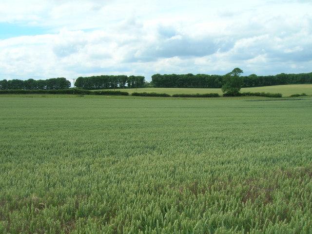 Farmland near North Grimston
