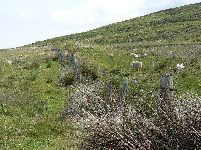 Livestock fencing on Cnoc Odhar Auchaluskin