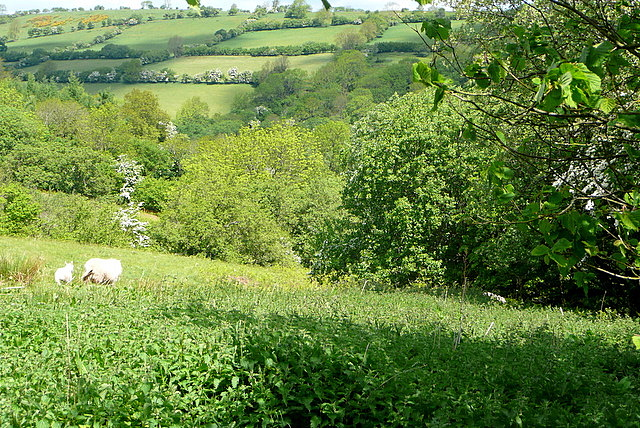 From the bridleway