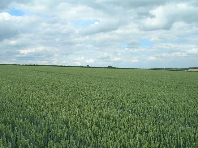 Farmland north of  Wharram le Street
