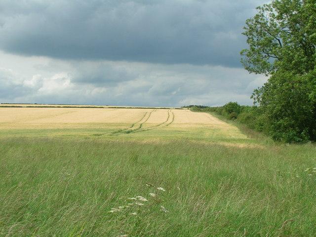 Farmland, Duggleby Wold