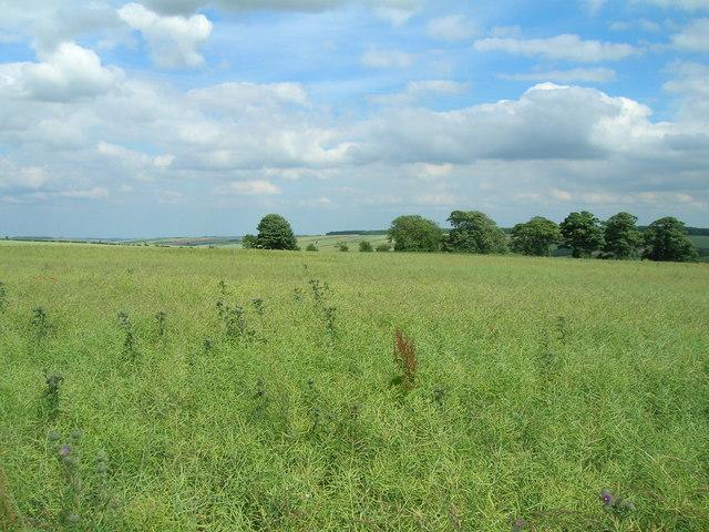 Farmland, Mowthorpe Wold