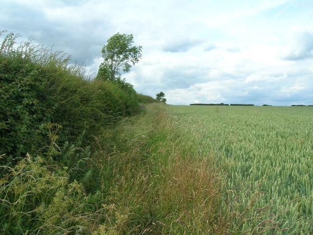 Overgrown bridleway north of Kirby Grindalythe