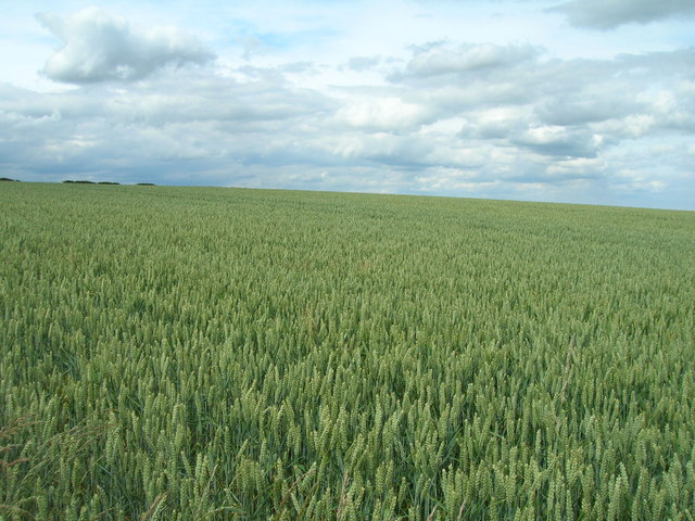 Farmland north of Kirby Grindalythe