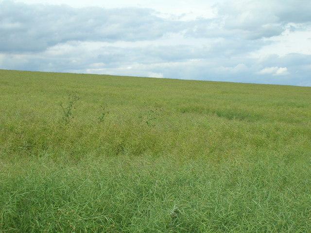 Farmland near Kirby Grindalythe