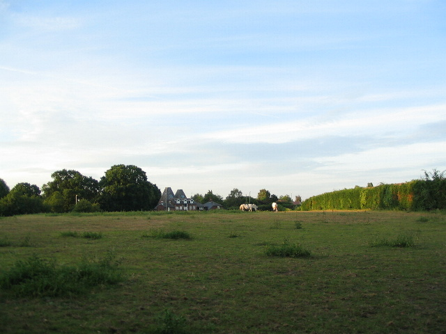 Field by Bekesbourne Lane