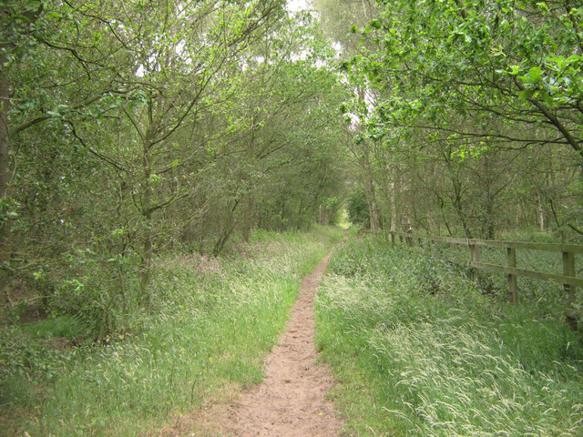 Looking east along the bridle path