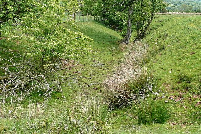Ditch on Cefn Hill