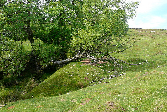 On Cefn Hill access land