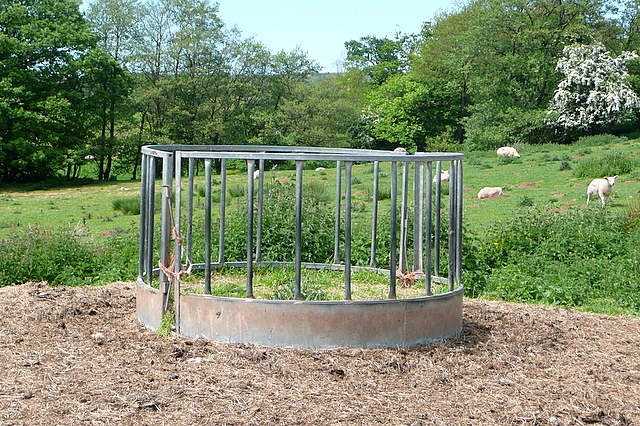 Feeder at Court Farm