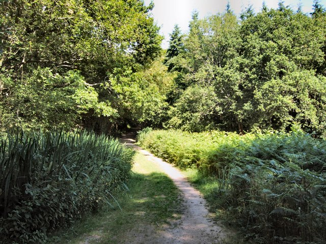 Town Wood