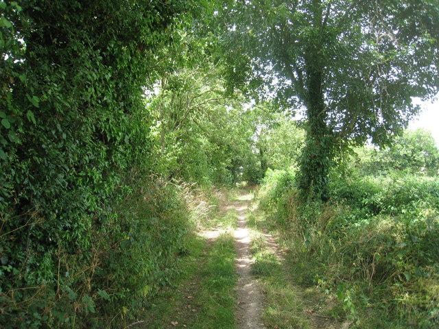 Green lane near Drews