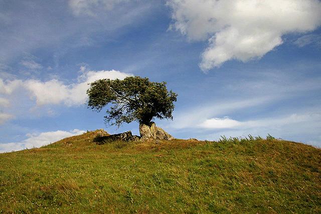 A rowan tree to the southwest of Kinninghall Hill