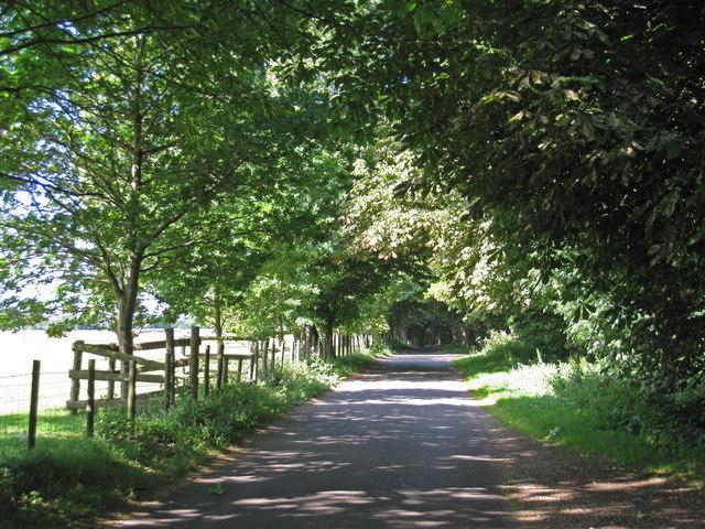 Lane Towards White Lodge