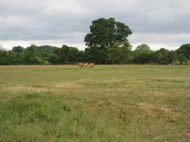 Cows near Linkend