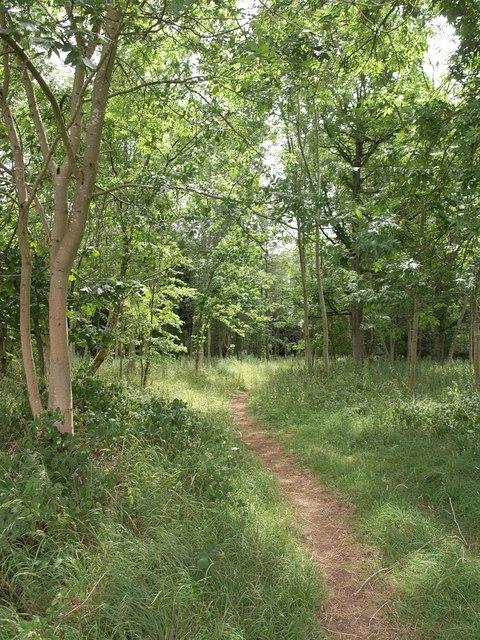 Path through woodland, Cirencester Park
