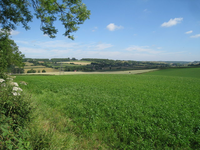 Crop Field off Shuttlesfield Lane