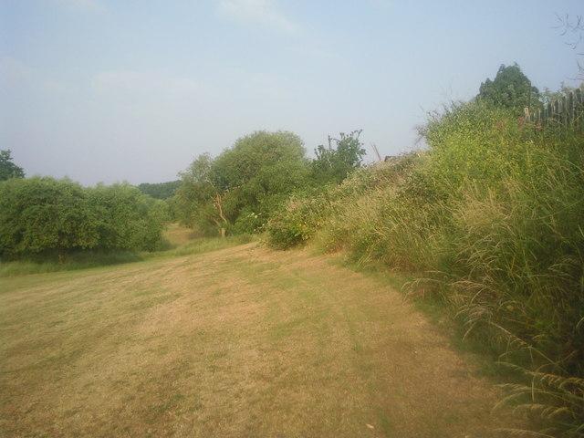 Streamway in summer