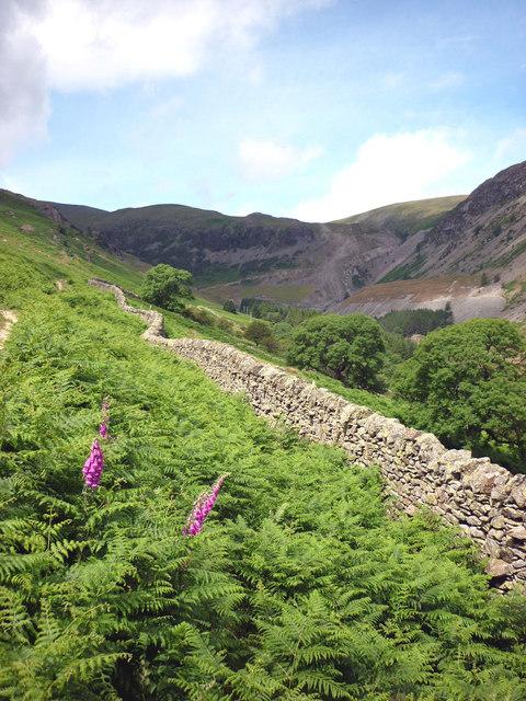 Wall and bracken, Glenridding