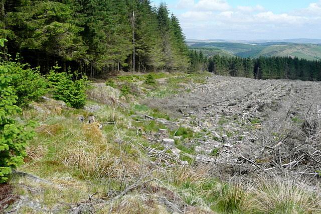 In Banc Glyngyrnant forest