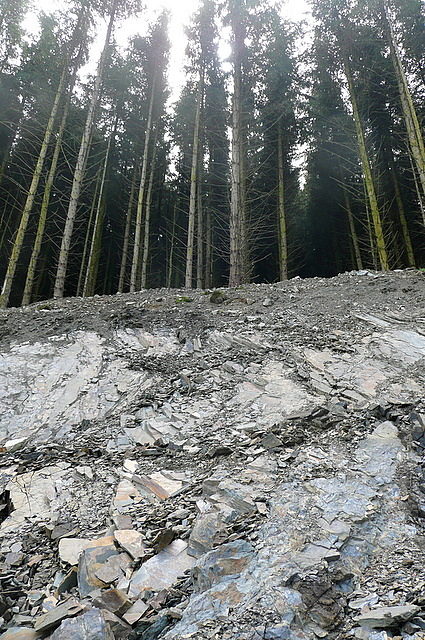 Quarry in Cwm Lletgwial forest