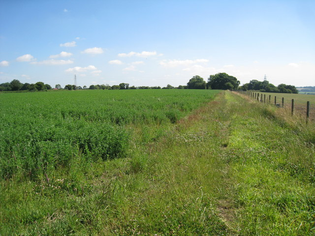 Crop Field off Chapel Lane
