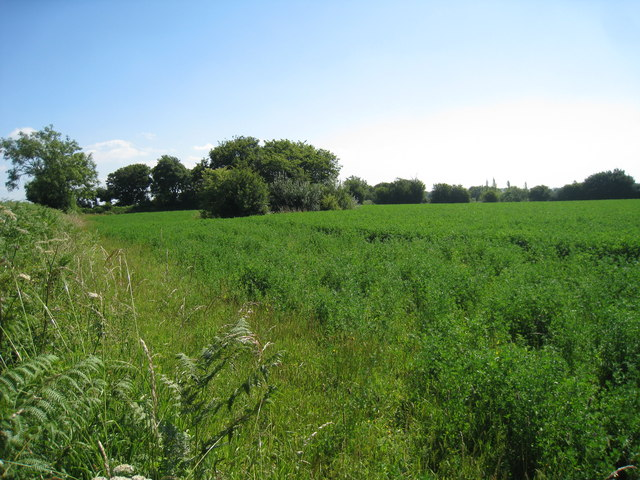 Cropland off Chapel Lane