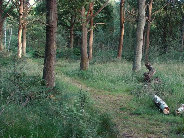 Stringers Common