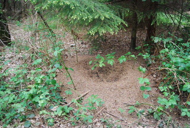 Ants' Nest, Rotherfield Wood