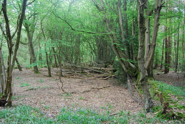 Coppiced fence, Rotherfield Wood