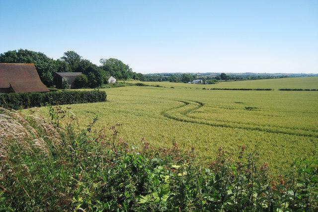 Wheat Field off Scot's Lane