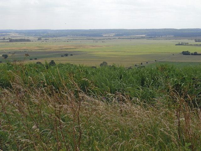 Miscanthus Field near Bonby