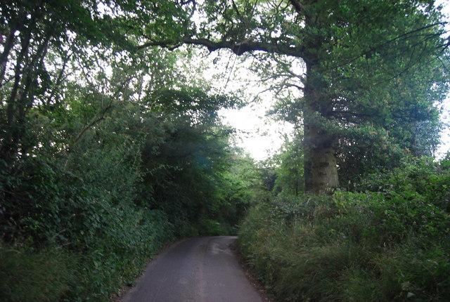 Lane in Bushes Wood