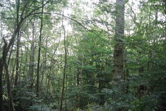 Bushes Wood