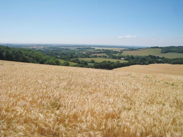 Wheat Field off Stone Street