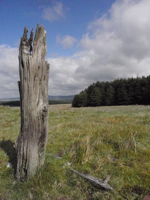 Lonely Tree Stump