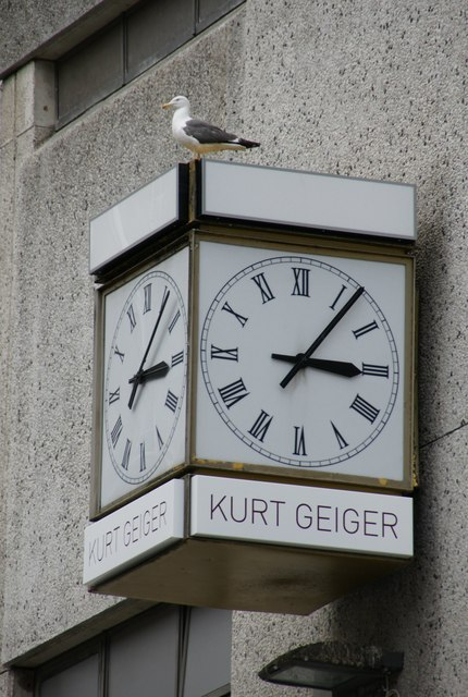 Lesser Black-backed Gull (Larus fuscus) on a clock, Church Street, Liverpool
