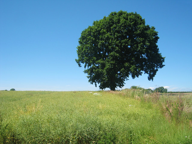 Tree and Crop Field