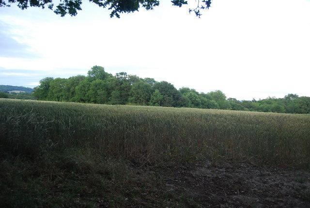 Wheat and Kiln Wood South