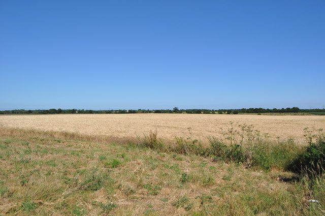 Fields at Loddon