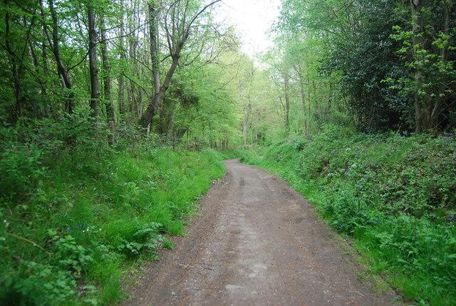 Sussex Border Path, Church Wood