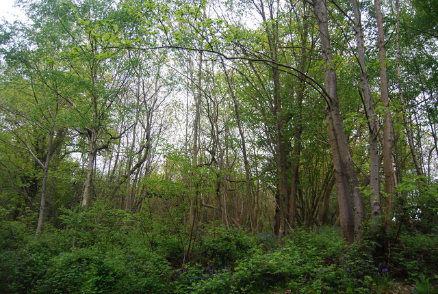 Church Wood