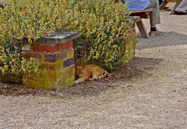 Sleeping cat in the beer garden