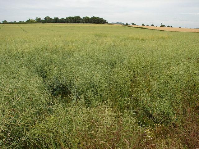 Field near Newton on the Hill