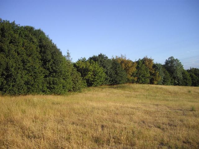 Mayor's Spinney, Highwoods Country Park